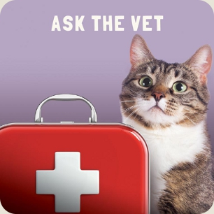 Ask the Vet